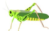 The Grasshopper Song