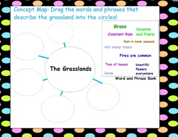 The Grassland (All About It!)