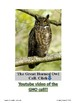 The Great Horned Owl Nature Study
