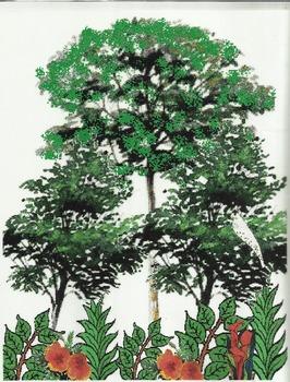 """The Great Kapok Tree"" Teaching Set"