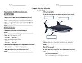 The Great White Shark - Reading Comprehension Work Sheet