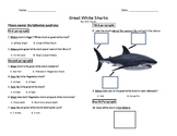 The Great white shark - reading comprehension differentiat