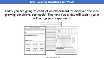 The Growth of Mold (Mould) in Different Environments. Full Life Science Lesson.