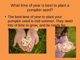 The Growth of a Pumpkin Powerpoint