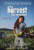 BEST SELLER: Spanish: The Harvest (La Cosecha) Movie Activ