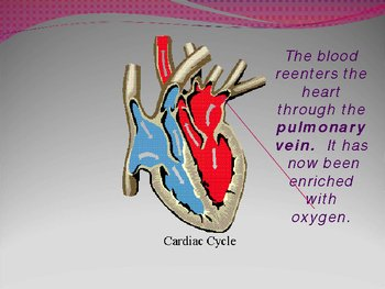 The Heart Powerpoint