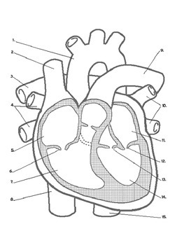 Science Unit: The Heart
