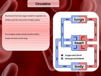 The Heart & Circulation Lesson
