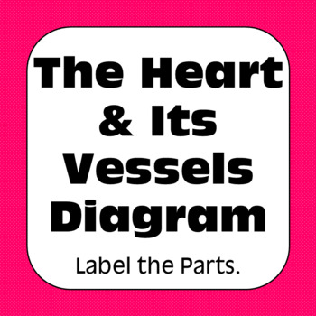 Anatomy and Physiology: Heart Diagram label & Color Personal Use Only