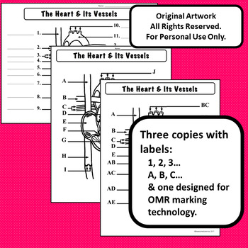 Heart Diagram label & Color Personal Use Only Anatomy and ...