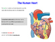 The Heart Structure
