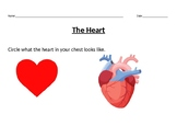 The Heart Study Guide/Follow Up Activity