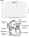 Human Body Systems Word Search: The Heart and Circulatory System Worksheet
