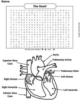 Human Body Systems Word Search: The Heart and Circulatory System ...