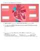 The Heart, part 1 - Under Pressure: Crash Course A&P #25 Video Sheet
