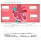 The Heart, part 1 - Under Pressure: Crash Course A&P #25 V