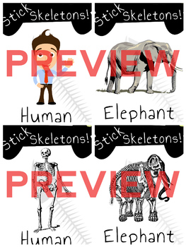 The Human Body / Animals: Skeletons