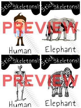 Skeleton Builder: The Human Body / Animals: Skeletons