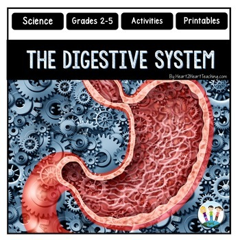 The Human Body - Digestive System - Learning about the Helpers of Digestion