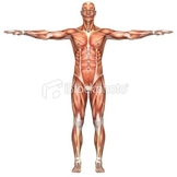 The Human Body-Grade 5