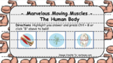 The Human Body - Marvelous Moving Muscles (Muscular System) Interactive Review