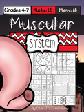 The Human Body {Muscular System}