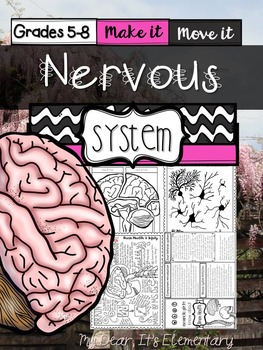The Human Body {Nervous System}