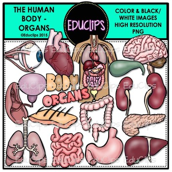 The Human Body - Organs Clip Art Bundle {Educlips Clipart}