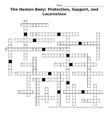 The Human Body: Protection, Support, and Locomotion Crossword Puzzle