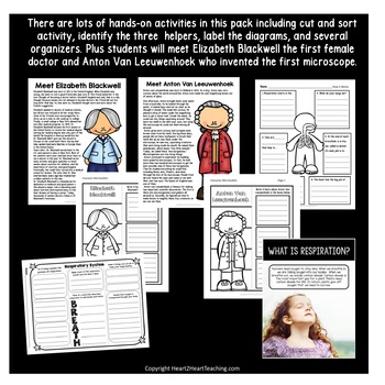The Human Body: Respiratory System - Our Lungs {Articles, Activities & Flipbook}