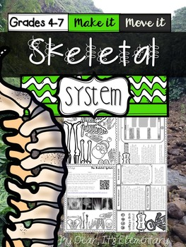 The Human Body {Skeletal System}