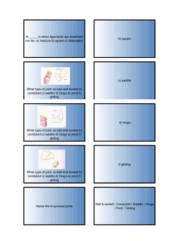 The Human Body - Skeletal System Flash Cards II
