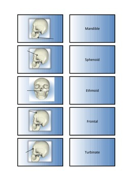 The Human Body - Skeletal System Flash Cards III