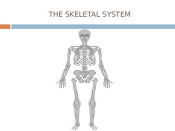 The Human Body System