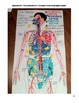 The Human Body {Systems Connections Assessment Plan}