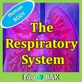 The Human Body Systems - Respiratory System - Powerpoint p