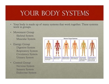 The Human Body Unit