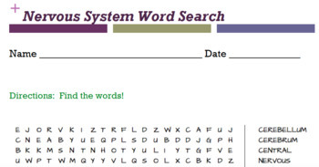 The Human Body Anatomy Word Searches