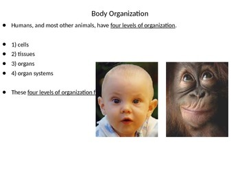 The Human Body's Organization and the Digestive System