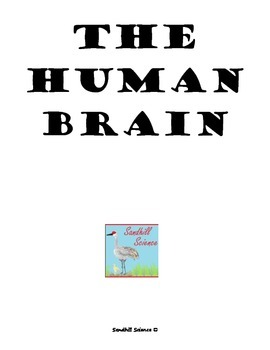 The Human Brain- Read and Label Worksheet