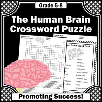 The Human Brain, Science Crossword Puzzle, Human Body Systems Worksheets