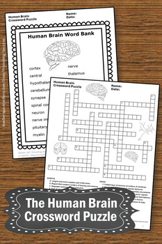 Human brain science crossword puzzle body systems worksheets the human brain science crossword puzzle body systems worksheets ccuart Image collections
