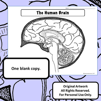 Anatomy and Physiology: Brain Diagram Label & Color For Personal Use Only