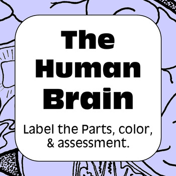 Human Brain Diagram Label & Color For Personal Use Only Anatomy and Physiology