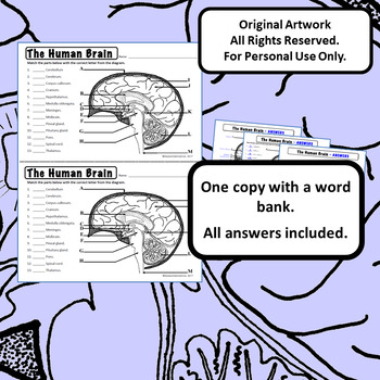 Human Brain Diagrams for Coloring Matching Labeling ...