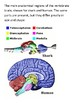 The Human Brain Word Search
