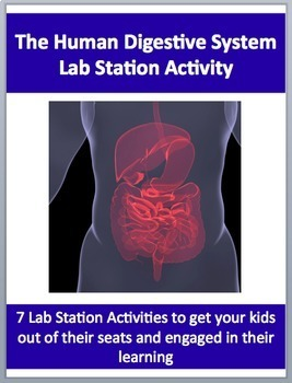 The Human Digestive System - 7 Engaging Lab Station Activities