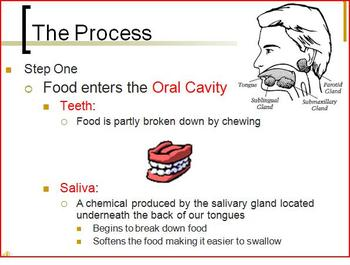 The Human Digestive System PowerPoint Presentation