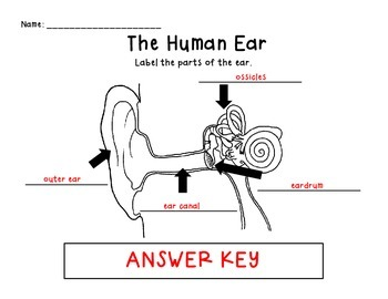 The Human Ear 2.P.1.2