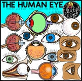 The Human Eye Clip Art Set {Educlips Clipart}